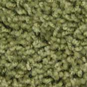 Ride the Wind Stainmaster Carpet